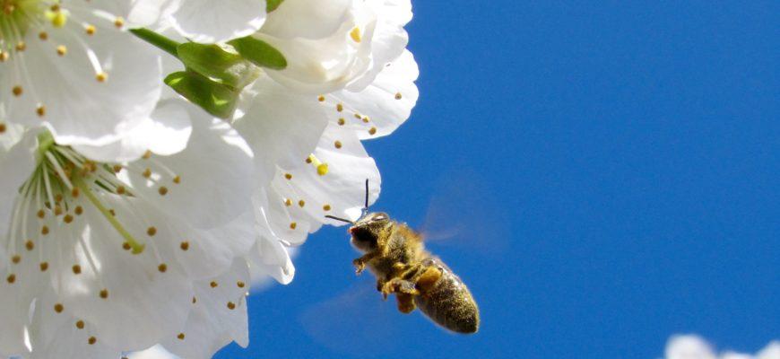 Koristne žuželke v naši visoki gredi